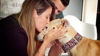 Video THIS DOG WAS NEVER KISSED IN HER ENTIRE LIFE... UNTIL TODAY MP3, 3GP, MP4, WEBM, AVI, FLV Desember 2018
