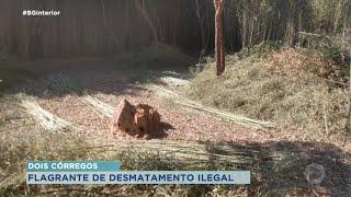 Flagrante de desmatamento de área de preservação ambiental em Dois Córregos