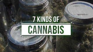 Beard Brothers  & 7 Kinds of Cannabis by Urban Grower