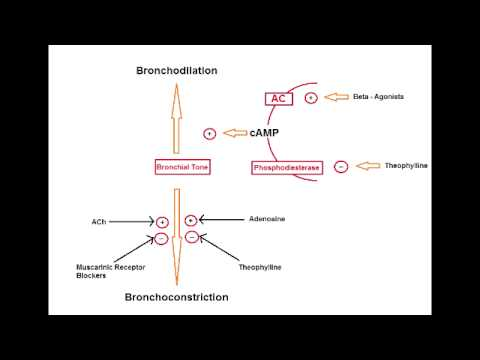 Asthma Drugs - Methylxanthines (Theophylline)