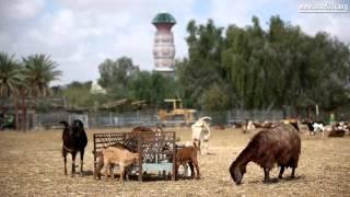 이스라엘의 사막 키부츠