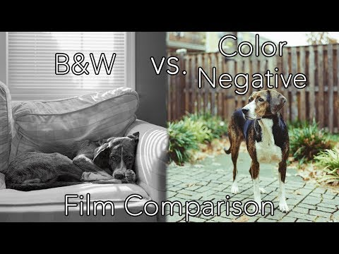 B&W vs. Color Negative Film: Which Is Better?