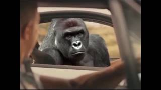 Nonton HARAMBE SEE YOU AGAIN VINE Film Subtitle Indonesia Streaming Movie Download