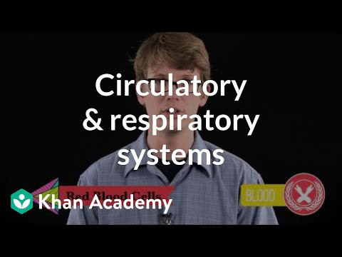 Circulatory Respiratory Systems Video Khan Academy