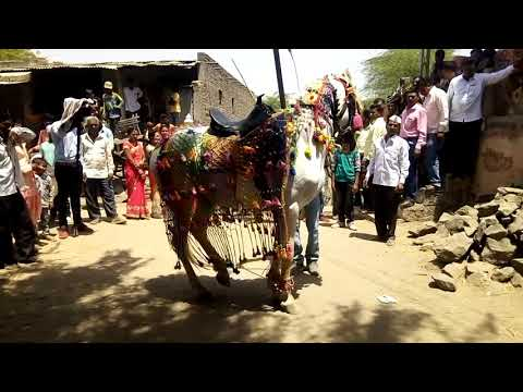 Video Horse dance on Sawan na mahinama at Ranjane. Tal.shindkheda.dis.dhule download in MP3, 3GP, MP4, WEBM, AVI, FLV January 2017