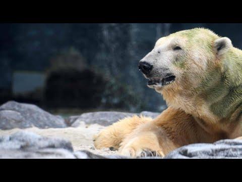 Singapur: Tropischer Eisbär