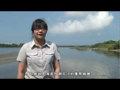 [行動解說員]台江國家公園- 四草湖