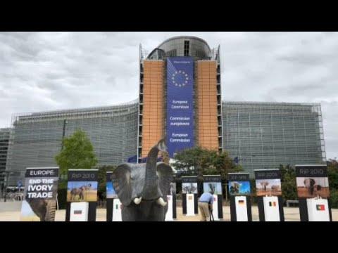 Βρυξέλλες: Διαδήλωση κατά της εμπορίας ελεφαντόδοντου