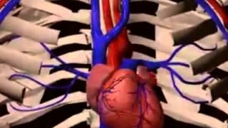 عرض عن الاوعية الدموية