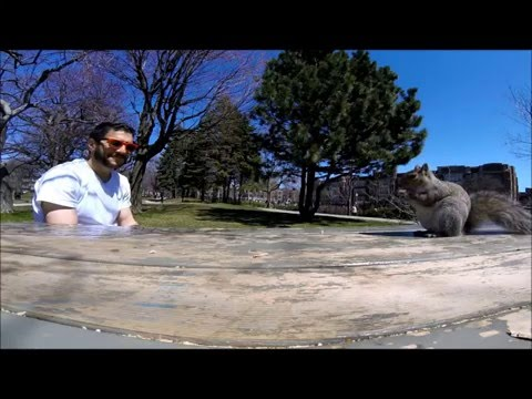 GoPro-Stealing Squirrel Interrupts Picnic