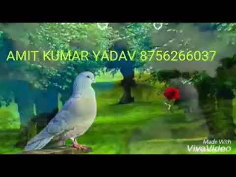 Video Tum mere baad Mohabbat Ko Taras Jaoge download in MP3, 3GP, MP4, WEBM, AVI, FLV January 2017