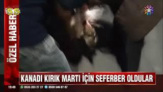 SAMSUN'DA KANADI KIRILAN MARTI İÇİN SEFERBER OLDULAR