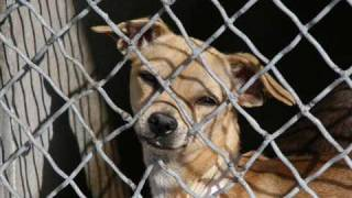Hope For Paws - fostered vs. shelter  (By Eldad Hagar)