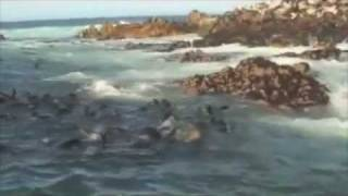 Amazing Great White Shark Cage Diving South Africa