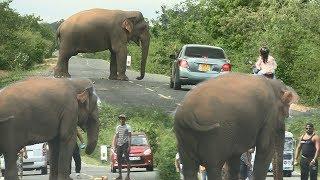 Video Huge Wild elephant waiting for food ! MP3, 3GP, MP4, WEBM, AVI, FLV Agustus 2019
