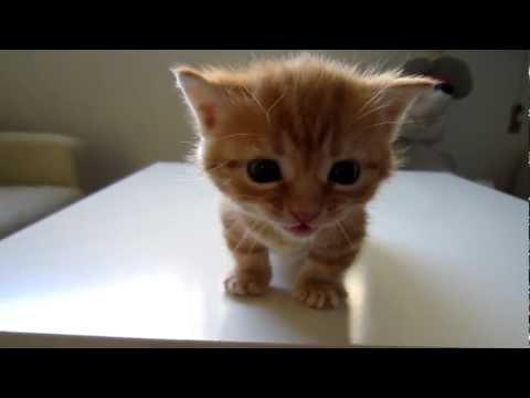 「[ネコ]全力で声を出していた子猫が、他の猫に注意され黙り込むのがカワユス。」のイメージ