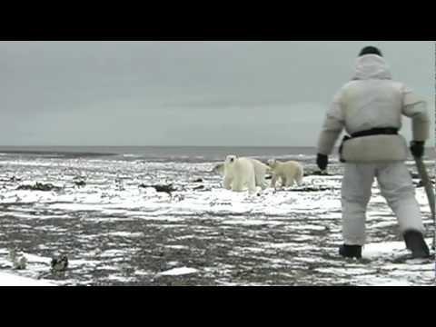 Fearless Man Scares Away A Polar Bear