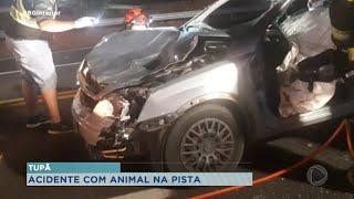 Mulher atropela cavalo na rodovia Comandante Ribeiro de Barros