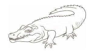 Видео: как нарисовать крокодила поэтапно