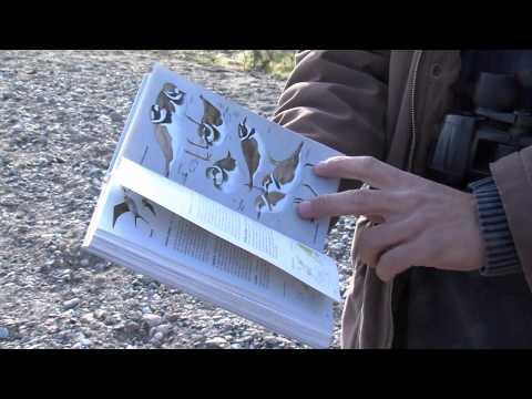 Ornitología en Sierra de las Nieves