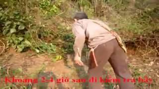 Đặc Sản Sơn La - Cận cảnh quá trình săn Gà Rừn...