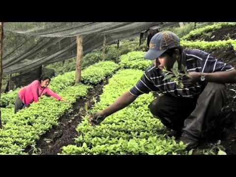 COPOLAD - Proyectos de desarrollo alternativo con enfoque de género. Vídeo 1