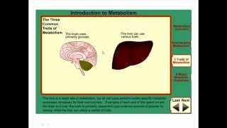 BASIC METABOLISM