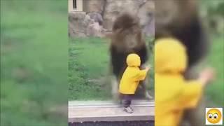Video Stupid Humans vs Smart Wild Animals 2 MP3, 3GP, MP4, WEBM, AVI, FLV Januari 2019