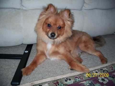 My New Puppy Dog Rusty!