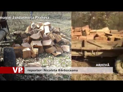 Furt de lemne, descoperit de polițiști