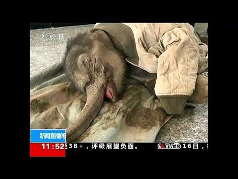Κίνα: Διάσωση μωρού ελέφαντα από χαντάκι