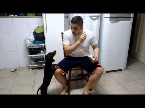 男子的狗狗一直不肯乖乖吃難吃的藥丸,但他只要說一句字,狗狗就像拼了命一樣想要吃!