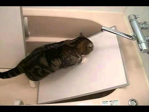AMAZING Cat Toilet Training Seat
