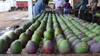 Del TERRITORIO al PLATO - Frutos tropicales