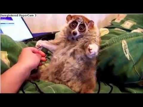 Die lustigsten Tiere aus aller Welt(Funniest animals all over the world)