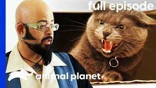 Aggressive Cat Is Stopping Owners From Getting Married! | My Cat From Hell (Full Episode) by Animal Planet