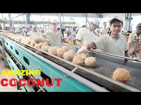 Video Amazing COCONUT Processing & Cutting Compilation ★ Fast Workers COCONUT Cutting Skills Food Machines download in MP3, 3GP, MP4, WEBM, AVI, FLV January 2017