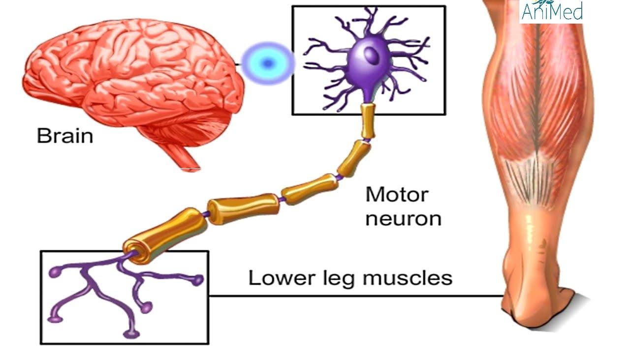 Brain Nervous System Check123 Video Encyclopedia