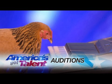 Video - This Chicken's Got Talent!