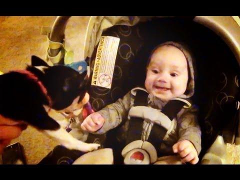 chihuahua e bambino - amorevolissimo!