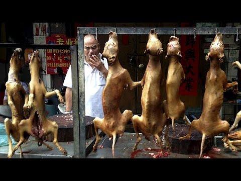 Κίνα: Ακτιβιστές ενάντια στο φεστιβάλ γαστρονομίας με κρέας σκύλου