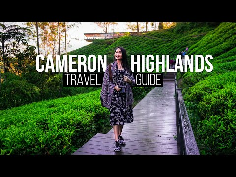 CAMERON HIGHLANDS | Complete Travel Guide  | Travel Malaysia