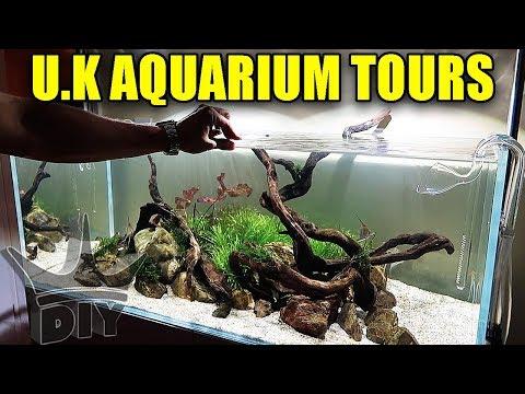 Aquarium tours in the UK_Akvárium. Heti legjobbak