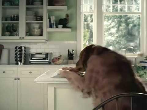 Comercial da Pepsi com um cachorro espertinho