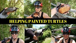 On June 26, 2017 I helped 3 Painted Turtles get safely across the Blackstone River Bikeway in Rhode Island. As most of you know.. I love Turtles. ********************************************************************Please Subscribe, Like, Comment and Share:You Tube:http://www.youtube.com/user/NaturesFairyMy second Channel: BikingAway:https://www.youtube.com/channel/UCfgDmWTZuHBlJxcyai0HBWQYou can find me on:Facebook Gluten Free Page:https://www.facebook.com/SharingGlutenFreeRecipesMy Blog for all my Gluten Free and some Low Carb Recipes:http://sharingglutenfreerecipes.blogspot.com/Instagram:http://instagram.com/sharingglutenfreerecipes/Pinterest:http://www.pinterest.com/naturesfairy/Twitter:https://twitter.com/NaturesFairyGoggle+:https://plus.google.com/u/0/104572512004936962263Tumblr:http://sharingglutenfreerecipes.tumblr.com/Thanks for watching,Peace ~ Love and JoyAlways be humble ~ Always be kindBrenda ~ NaturesFairy*******************************************************************Helping Turtles cross the roadSaving TurtlesRescuing TurtlesPainted TurtlesSun TurtlesRhode Island TurtlesTurtlesTurtles on LandFemale TurtlesTurtle EggsTurtles on Bike pathTurtles on BikewayTurtles crossing RoadTurtles crossing BikepathBlackstone River BikewayBlackstone River Bike Path Blackstone River GreenwayBlackstone RiverBlackstone Heritage CorridorBlackstone Heritage ParkBlackstone River State ParkNatureWildlifeHerpingRhode Island HerpingHerperRhode Island HerperWoonsocket Rhode IslandCumberland Rhode IslandLincoln Rhode IslandRhode Island Bike PathRhode Island BikewayCamera:Nikon CoolPix S9900 30X ZoomEditing Program:Sony Movie Studio 13 Suite
