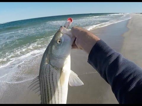 Striped Bass Gone Crazy! NJ 9/16