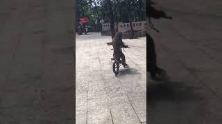 Heboh!!!! Monyet Naik Sepeda Nabrak Pohon