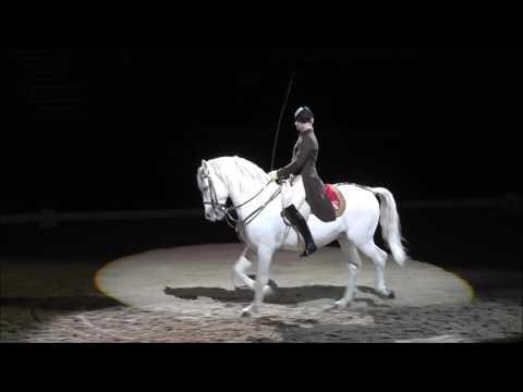 A Bécsi Spanyol lovasiskola budapesti előadásából
