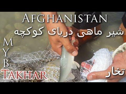 سید و شیکار شیر ماهی دریای کوکچه تخار Coconut Sea Fish Takhar Afghanistan