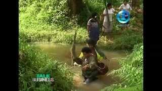 RURAL WOMEN EMPOWERMENT - TAILEVU FARMING
